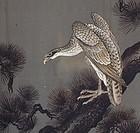 Hawk on Pine Tree on Men