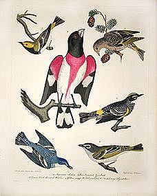 """American Ornithology By Alexander Wilson"