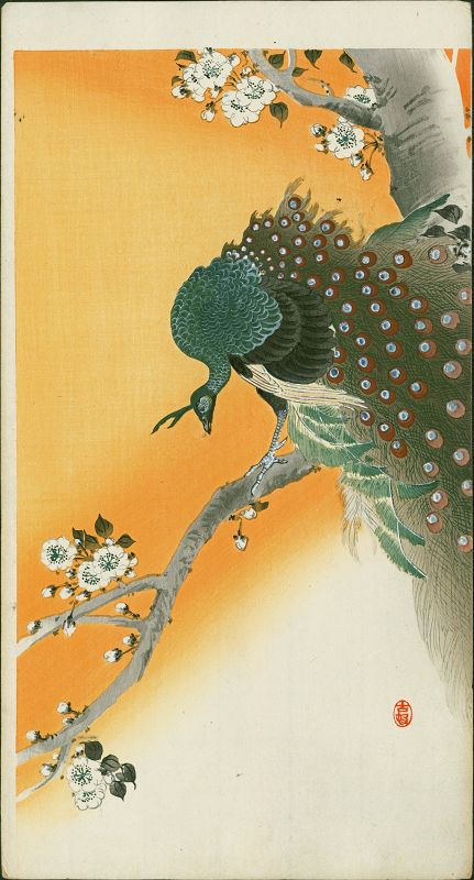 Ohara Koson Japanese Woodblock Print Peacock on Flowering Cherry RARE