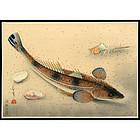 Ohno Bakufu Fish Series Woodblock - Flatheads (Kochi)
