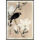 Rare Ohara Hoson Woodblock Print - Myna Bird