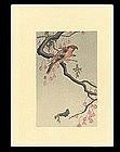 Ohara Koson Woodblock - Red Crossbill