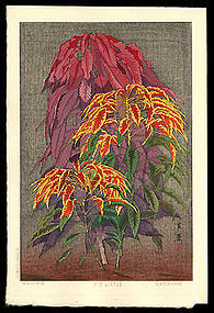 Taisui Woodblock - Coleus - Muller Estate