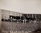 Album with views of Ancient Egypt, Photographs 02 to 13