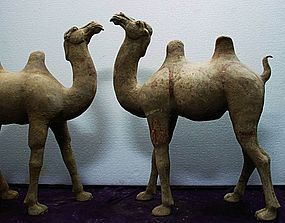 Tang dynasty walking camel