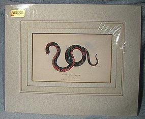 KEARSLEY H/COLOR MOURNING SNAKE COPPER PLATE PRINT 1802