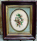 19thC BOTANICAL STUDY WATERCOLOUR c1870 MAHOGANY FRAME