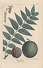 North American Sylva Black Walnut